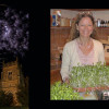 Dawn Campbell – Health Coach & Living Foods Practitioner