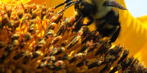 Co-Creating Our Universe For The Good of All – Even the Bees!